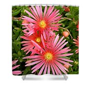 Mesa Verde Ice Plant Shower Curtain