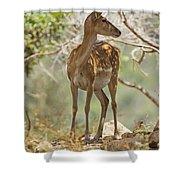 Mesopotamian Fallow Deer 5 Shower Curtain