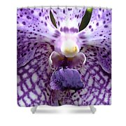 Micro Orchid Shower Curtain
