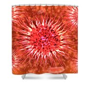 Microscopic View Of Dendrimers Shower Curtain