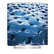 Microscopic View Of Dentine Shower Curtain