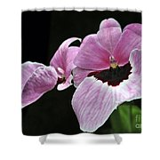Miltoniopsis Alger Shower Curtain