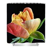 Minature Rose  Shower Curtain