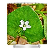 Miner's Lettuce In Park Sierra Near Coarsegold-california  Shower Curtain