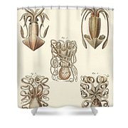 Molluscs Or Soft Worms Shower Curtain