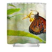 Queen Butterfly Danaus Gilippus Shower Curtain