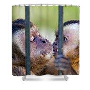 Monkey Species Cebus Apella Behind Bars Shower Curtain