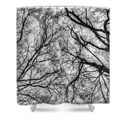 Monochrome Forest Shower Curtain