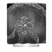 Moon Jellyfish - Black And White Shower Curtain