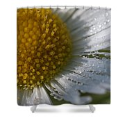 Mornings Dew Shower Curtain