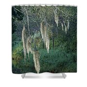Moss Hanging Over The River Shower Curtain
