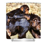 Mother Chimpanzee With Baby On Her Back Shower Curtain
