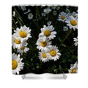 Mountain Daisies Shower Curtain