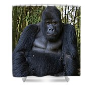 Mountain Gorilla Silverback Shower Curtain