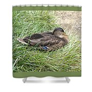 Ms Mallard Shower Curtain