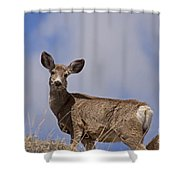 Mule Deer   #0722 Shower Curtain