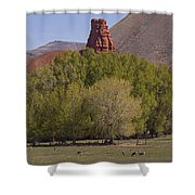 Mule Deer   #2240 Shower Curtain