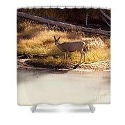 Mule Deer   #3942 Shower Curtain