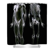 Muscles And Bones Shower Curtain