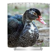 Muscovy 14-8 Shower Curtain