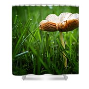 Mushroom Growing Wild On Lawn Shower Curtain