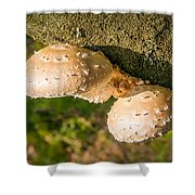 Mushroom On Tree Trunk Shower Curtain