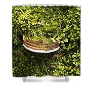 Mushroom Plate Shower Curtain