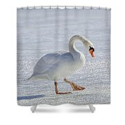 Mute Swan On St Clair River Shower Curtain