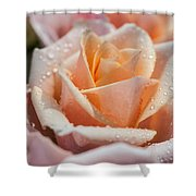 My Birthday Rose 1 Shower Curtain