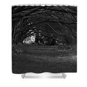Mystical Yew Trees 1 Shower Curtain