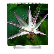 Narcissus In Jim Thompson House And Museum In Bangkok-thailand. Shower Curtain