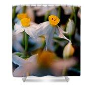 Narcissus Tazetta Shower Curtain