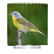 Nashville Warbler Vermivora Ruficapilla Shower Curtain