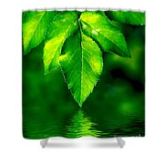 Natural Leaves Background Shower Curtain