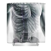Nerves Of The Trunk Shower Curtain