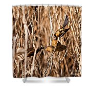 New Zealand Fantail Chicks Being Fed By Parents Shower Curtain