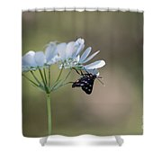 Nine-spotted Moth Shower Curtain