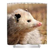 North American Opossum In Winter Shower Curtain