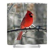 Northern Cardinal 2  Shower Curtain