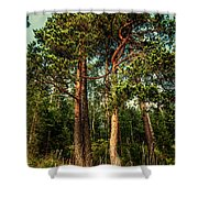 Northern Forest  Shower Curtain