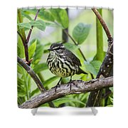 Northern Water Thrush Shower Curtain