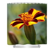 Novelty French Marigold Named Mr. Majestic Shower Curtain