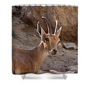 Nubian Ibex Shower Curtain