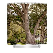 Oak Alley Backyard Shower Curtain