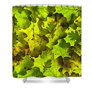 Oak Leaf Background Shower Curtain