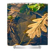 Oak Leaves In A Puddle Shower Curtain