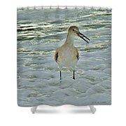 Ocean Bird Shower Curtain