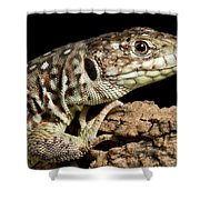 Ocellated Lizard Timon Lepidus Shower Curtain