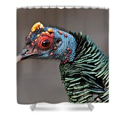 Ocellated Turkey Portrait Shower Curtain