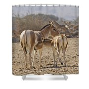 Onager Equus Hemionus Shower Curtain